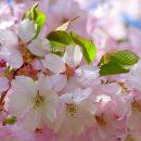Spring Equinox Day
